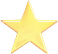 Gold Plated Pin- Star